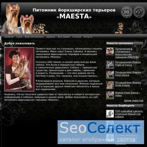 """Питомник йоркширских терьеров ""Maesta"" - http://www.maestayork.ru/"