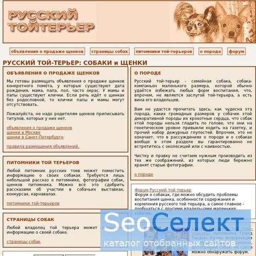 Русский той-терьер (тойтерьер), щенки, питомники - http://toy-terrier.narod.ru/