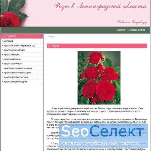 Сорта роз - http://rose-bush.spb.ru/