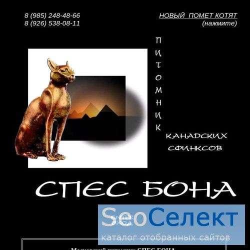 Спес Бона - питомник канадских сфинксов - http://spes-bona.bel-etual.ru/